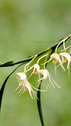Orchidaceae, Landscaping Company, Great Pictures, Houseplants, Indoor Plants, Orchids, Join, Tropical, Magic