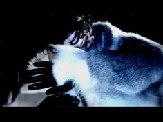 IAMX Tear Garden Official Video -full length-