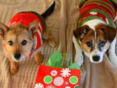Here's What 20 Dogs Think About Their Ugly Christmas Sweaters - brainjet.com