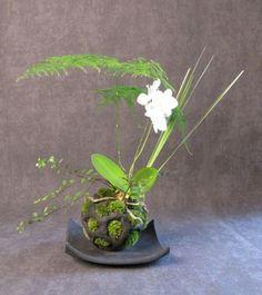 Le kokedama par culturejardin.fr #japon #plante
