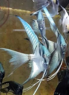 Фотография Tropical Fish Aquarium, Freshwater Aquarium Fish, Aquarium Fish Tank, Fish Tanks, Saltwater Tank, Saltwater Aquarium, Angel Fish Tank, Oscar Fish, Discus Fish