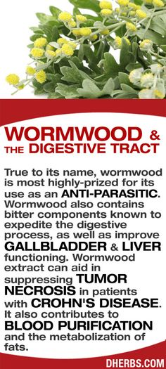 True to its name, wormwood is most highly-prized for its use as an anti-parasitic. Wormwood also contains bitter components known to expedite the digestive process, as well as improve gallbladder & liver functioning. Wormwood extract can aid in suppressing tumor necrosis in patients with Crohn's disease. It also contributes to blood purification and the metabolization of fats. #dherbs #healthtips