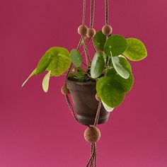 KORK Plant Hanger (Multicoloured)  |    The Z-List  |    http://the-z-list.co.uk/product/kia-utzon-frank-kork-plant-hanger-multicoloured