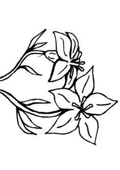 Les 14 Meilleures Images De Fleur De Monoi Fleur De Monoi