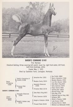 The greatest dynasty in American Saddlebred history came to a close on July 8 th , 1975 when Dodge Stables held its dispersal sale. All The Pretty Horses, Beautiful Horses, Race Horse Breeds, Appaloosa Horses, Arabian Horses, Walking Horse, American Saddlebred, Horse Photos, Horse Care