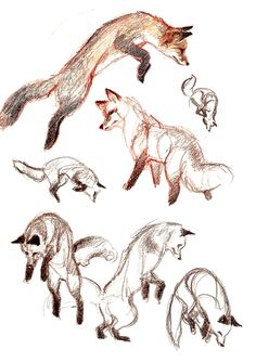 news - Animal - Art Sketches Animal Sketches, Animal Drawings, Art Drawings, Fox Drawing, Drawing Sketches, Drawing Ideas, Arte Sketchbook, Easy Animals, Poses References