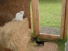 Cat Enclosures is our theme for this month. Please visit us and share pictures of cat enclosures.