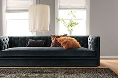 """""""I love the Macalaster sofa, as it's an updated version of a timeless classic. I love the flexibility of it being paired with very classic furniture, or mixing it with very modern furniture. So deep and comfy without being stuffy."""" - Deb, Visual Associate"""