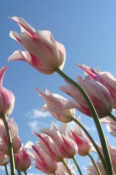 New free photo by Miranda Sehl. See more of Miranda's work on Pexels at https://www.pexels.com/u/mirindir #sky #flowers #spring