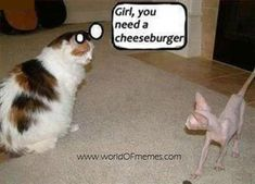 I personally love memes and funny cat memes are my personal favorite. Who could resist adorable images of cats, dogs, and other animals next to a funny tagline? Cat Memes To Make You Laugh Until You Cry! Funny Animal Memes, Funny Animal Pictures, Cute Funny Animals, Funny Cute, Funny Photos, Funniest Animals, Meme Chat, Memes Humor, Funny Memes