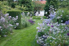 Campanula lactiflora 'Loddon Anna', Campanula lactiflora 'Prichard's Variety', Salvia `Dear Anja', Thalictrum `Splendide', Aster cordifolius 'Little Carlow'