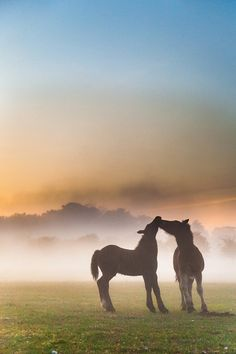 ~♥~Love in the mist