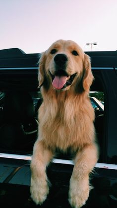 I want a golden retriever when married