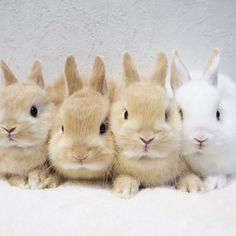 Baby Animals Super Cute, Cute Baby Bunnies, Cute Little Animals, Cute Babies, Fox And Rabbit, Pet Rabbit, Dwarf Rabbit, Rabbit Pictures, Cute Animal Pictures
