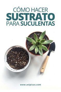 Succulent Arrangements, Succulents Garden, Garden Cactus, Container Gardening, Gardening Tips, Suculentas Interior, Suculent Plants, Growing Greens, Vintage Garden Decor