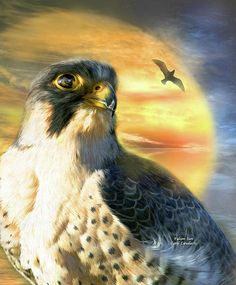 Falcon, solar spirit creature of stamina, strength, and strategy. When you show yourself to us as a spirit guide your message is to focus on our desires and goals. To take action and pursue our deepest passions not with haste or impatience but with thought, intelligence and unwavering conviction.