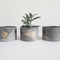 FUME's concrete jars or concrete planters can be used to style your home or office. Diy Cement Planters, Diy Concrete Planters, Concrete Crafts, Concrete Projects, Wall Planters, Succulent Planters, Succulents Garden, Concrete Color, Concrete Design