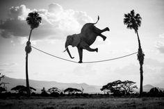 Thomas Subtil - 'Hakuna Matata' o 'La vera vita degli animali selvaggi'