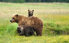 A popular – and needed – wildfire funding bill must move forward, but without amendments that derail bear and salmon protections in the Tongass National Forest. I signed this petition to help - will you?