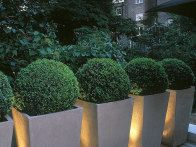 Up lighting is used to highlight or accent distinct plants or accessories in a yard. Spotlight or floodlight fixtures mounted on the ground are the best way to achieve this technique. Here up lights feature contemporary containers at night.