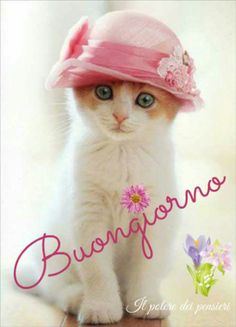 Buongiorno gatto Good Day, Good Morning, Italian Memes, Italian Quotes, Sarcasm, Cats, Frases, Messages, Bonjour