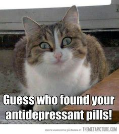 I'm still laughing!