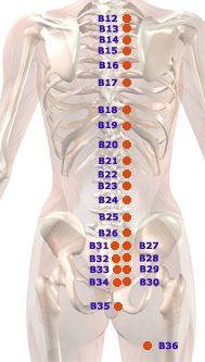 akupunkturpunkte blase - Google Search Angst, Google, Runny Nose, Self Discipline, Chinese Medicine