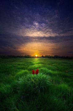 crescentmoon06:   by Phil Koch on 500px