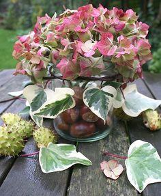 Hydrangea and conker arrangement Conkers, Hydrangeas, Pine Cones, Shrubs, Candle Jars, Outdoor Gardens, Flower Arrangements, Succulents, House Design