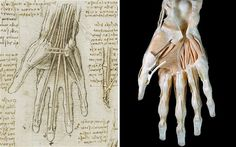 """Leonardo da Vinci's anatomical drawings were """"startling"""" in their accuracy, new medical scans have shown, putting him hundreds of years ahead of his peers."""