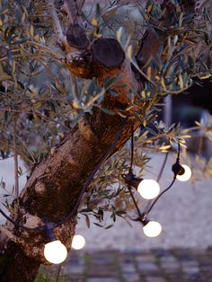 Fabulous Extendable Festoon Lights - Outdoor Living
