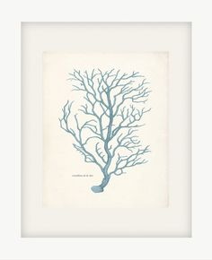 Antique Sea Coral Print