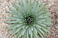 Immagine di http://www.olgiatalife.it/wp-content/gallery/floracult-3/pianta-grassa.jpg.