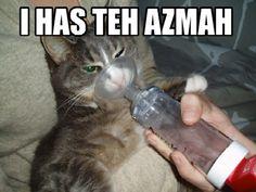 poor azmah cat