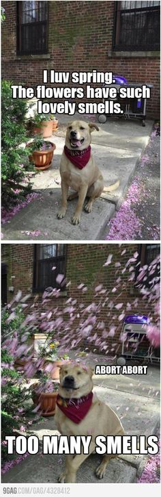 Funny pictures about The wonders of spring. Oh, and cool pics about The wonders of spring. Also, The wonders of spring. Funny Animal Memes, Dog Memes, Funny Animal Pictures, Cute Funny Animals, Funny Cute, Dog Pictures, Funny Dogs, Cute Dogs, Funny Memes