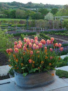 Holt Organic Farm in Spring