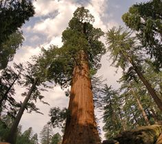 Top 10 places to visit in California!... Sequoia and Kings Canyon National Parks