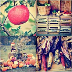 Natures Select Orchard