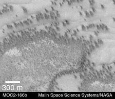 Mars Trees andShrubs