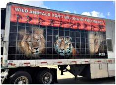 WOOHOO! GREAT NEWS! Bill Cunningham, the owner of the George Carden International Circus, the largest producer of Shrine circuses in the US is ENDING WILD ANIMAL ACTS IMMEDIATELY
