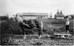 Ensio Simonpoika Pessi äestämässä Selma nimisellä tammalla 1931-1932 . Simo Pessin talous rakennukset taustalla, kevättyöt käynnissä . Kaukola, Paavilanmäki