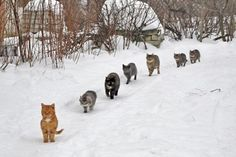 cats in the snow...on their way home