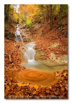 flowing through the leaves