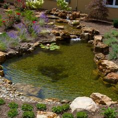 Can't wait to see our pond look like this again! #waterfeaturewednesday #atlanticwatergardens