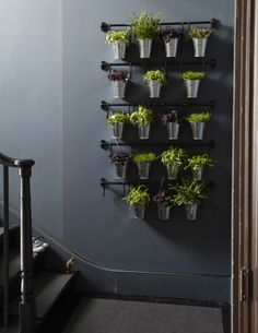 Hæng planter og krydderurter på væggen i stedet for billeder