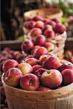 autumn harvest - bushels of apples - Apple Apple Harvest, Bountiful Harvest, Harvest Time, Fall Harvest, Apple Farm, Apple Orchard, Apple Season, Fall Season, Beautiful Fruits