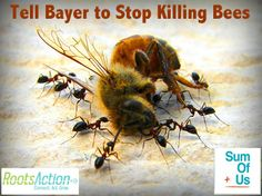 Tell Bayer to stop killing bees  Bayer, the global chemical company, is manufacturing a chemical that new evidence shows is killing off bees.  30% of our crops -- and 90% of wild plants -- rely on bees to thrive. WE rely on bees to survive.