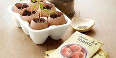 Start plants indoors in egg planters! Love it! #garden
