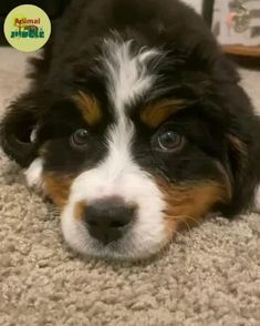 Cute Animal Memes, Animal Jokes, Cute Memes, Animal Facts, Funny Animal Videos, Baby Animals Pictures, Like Animals, Cute Animal Pictures, Animals And Pets