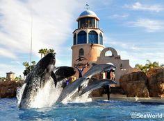 SeaWorld San Diego - TourGuideTim Reveals San Diego!